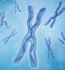 کروموزوم -تست ژنتیک