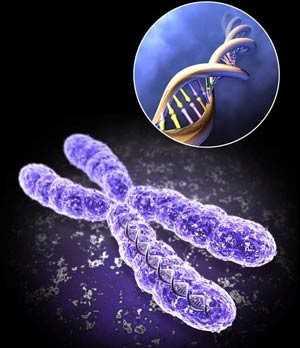 ساختار ژن ها