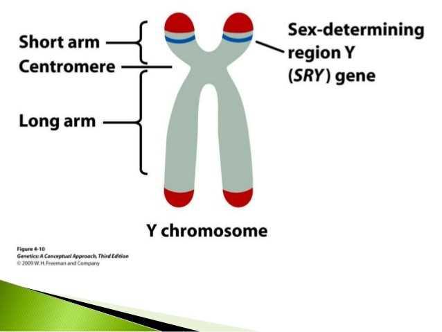 آزمایش ژنتیک پدر