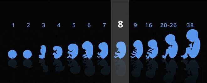 آزمایش ژنتیک برای تعیین جنسیت