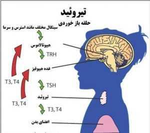 تفسیر TSH