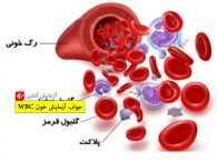 جواب آزمایش خون WBC